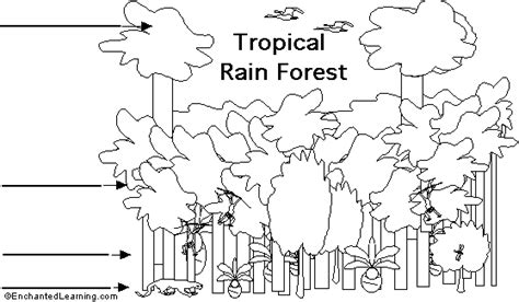 rainforest canopy coloring page label tropical rainforest strata printout