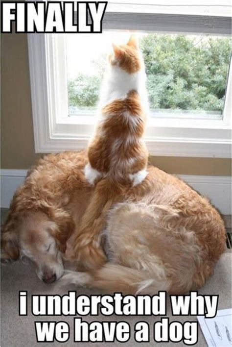 Funny Dog And Cat Memes - you are awesome dog wesharepics