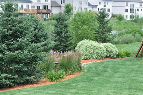 top 28 trees zone 7 17 best images about property