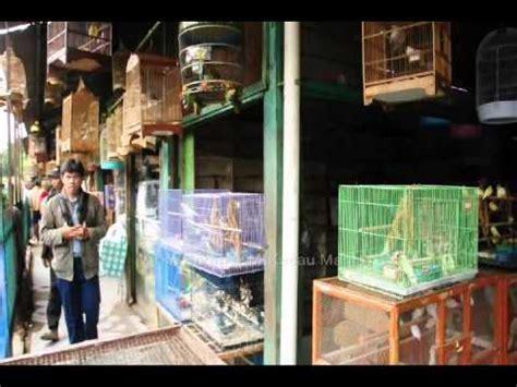 berburu burung di pasar pramuka toko burung sukses laris merah putih bird shop funnydog tv