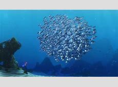 """The school of moonfish, characters from """"Finding Nemo ... Finding Nemo Quotes Dory"""