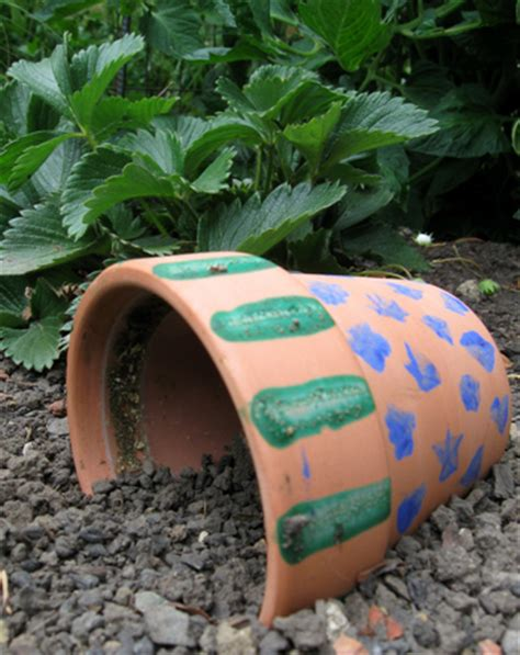 how to catch a toad in your backyard build a toad abode activity education com