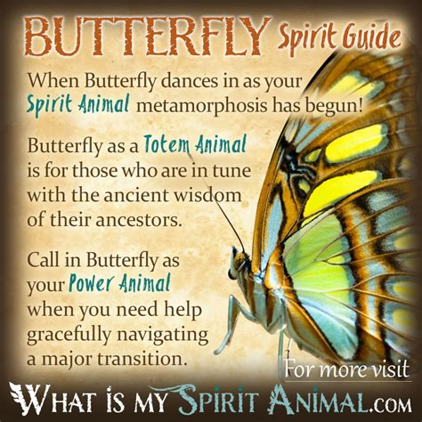symbolizes meaning butterfly symbolism meaning spirit totem power animal