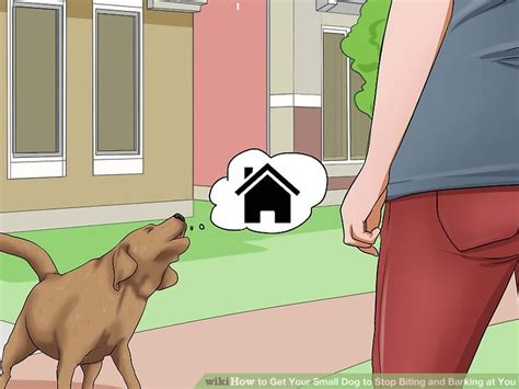 how to get your to stop biting how to get your small to stop biting and barking at you