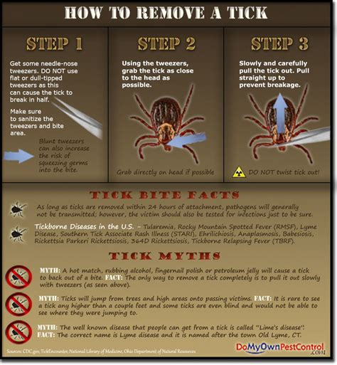 how to take a tick a how to remove a tick visual ly