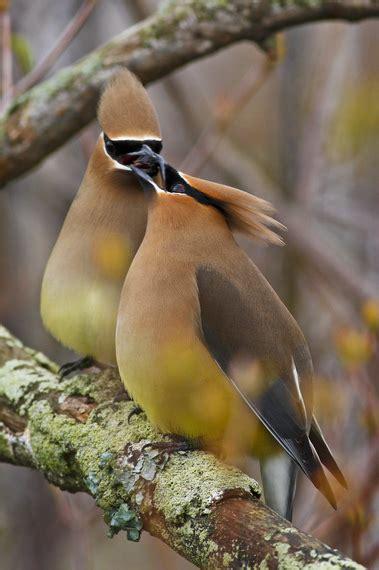 stop feeding bread to birds