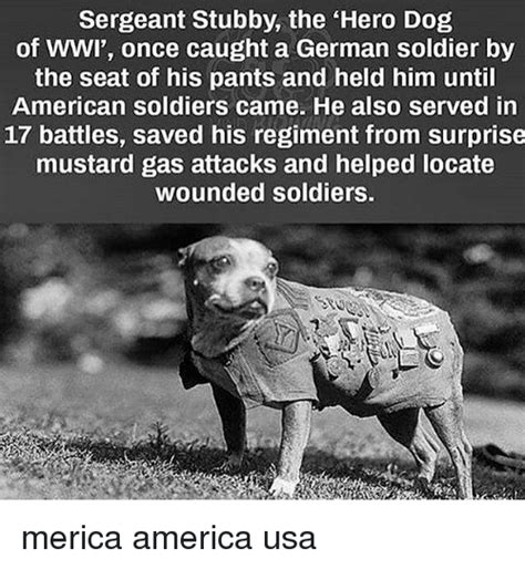 Sergeant Stubby Biography 25 Best Memes About Wwi Wwi Memes
