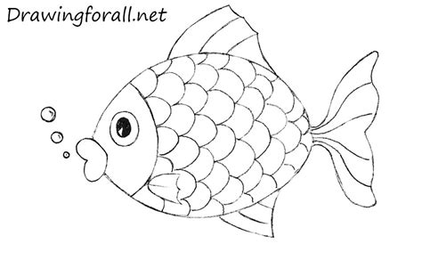 How To Draw Fish How To Draw A Fish For Drawingforall Net