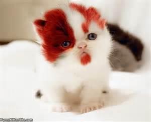 Cute face kitten funnykittensite com