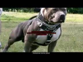 Top 10 world s strongest dogs youtube