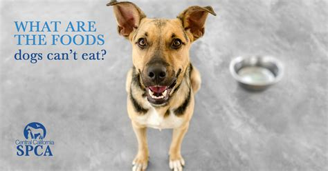 dogs can t eat what are the foods dogs can t eat