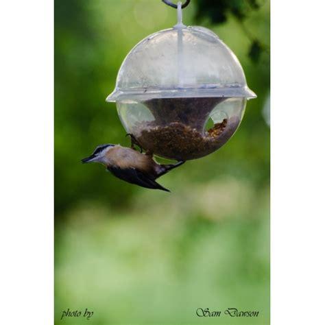 Globe Seed Feeder k7 globe seed feeder