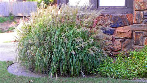 Mexican Bathroom Ideas South Central Gardening Ornamental Grasses