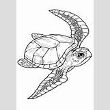Loggerhead Sea Turtle Pictures | 358 x 512 jpeg 33kB