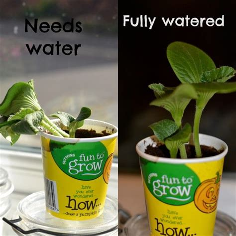 what of light do plants need why do plants need water plants water and photosynthesis