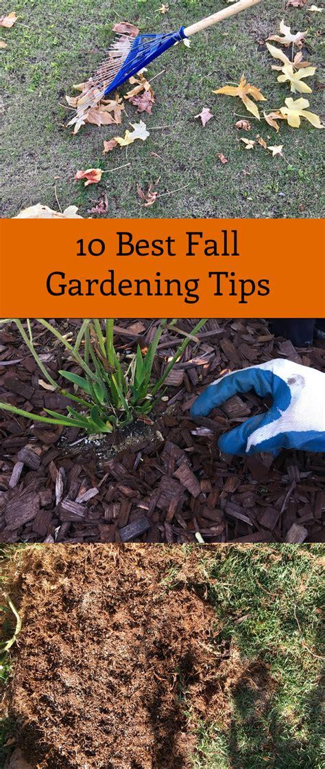 10 best fall gardening tips you can do this fall 183 just
