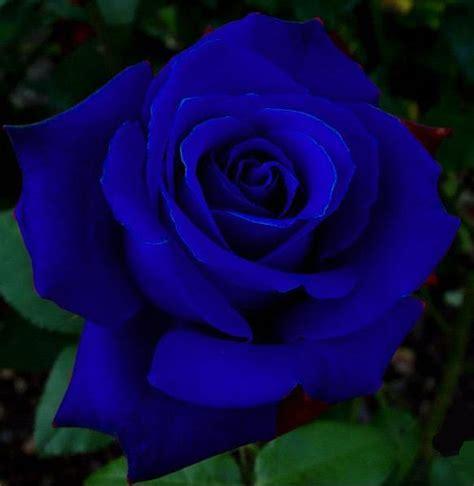 imagenes de flores que se mueven untitled imagenes de rosas que se mueven y brillan