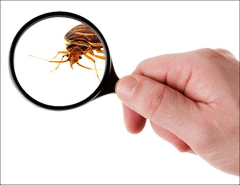 best bed bug exterminator finding the best toronto bed bug exterminator swift x pest control