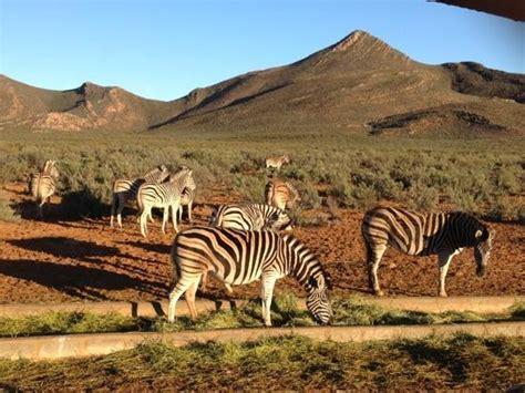Aqilla Cape zuid afrika specialist 1 dag safari aquila reserve reisnr er 012