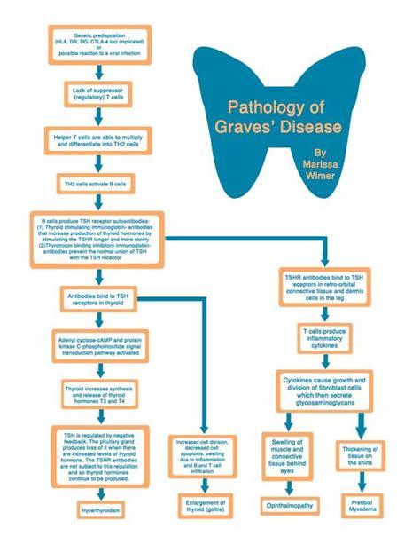 endocrine flowchart disease flowchart thyroid