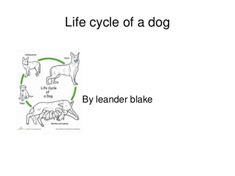 cycle of a puppy cycle of a