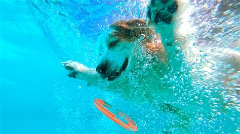 dogs in water dogs in water 15 funnydog tv