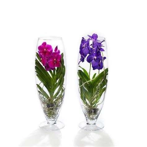 orchidea vanda in vaso di vetro orchidee vanda royal