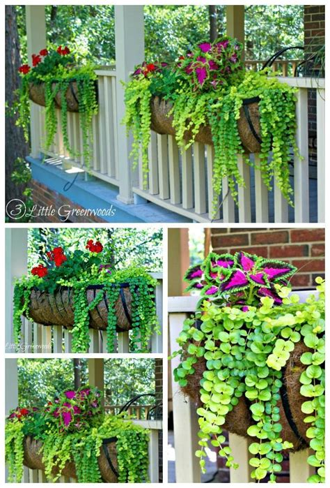 decorative garden hanging baskets 25 best ideas about decorative hanging baskets on