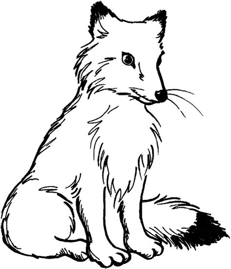 kit fox coloring page kit fox is sitting coloring pages download print