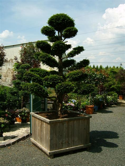 bonsai haus gartenbonsai vom fachbetrieb bonsai in