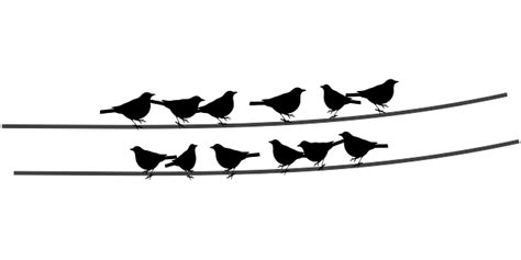 Disn Y Back birds wire cable sitting 183 free vector graphic on pixabay