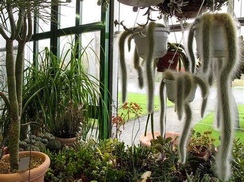 piante da arredo compagnia delle piante ornamentali piante da interno