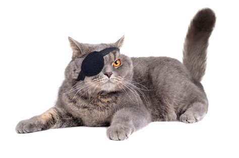 How to Make Your Own Awesome Eye Patch   The DIY Guide