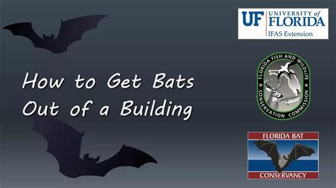 how to get a bat out of the house how to get bats out of a building youtube