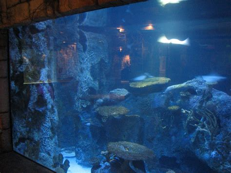 Small Saltwater Sharks For Home Aquariums Small Rays For Home Aquarium 28 Images 301 Moved