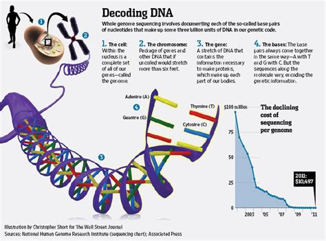 genome mapping breakthrough map your dna for 1 000