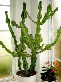 Large Indoor Cactus » Ideas Home Design