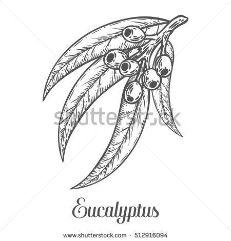 eucalyptus coloring page eucalyptus coloring page coloring pages