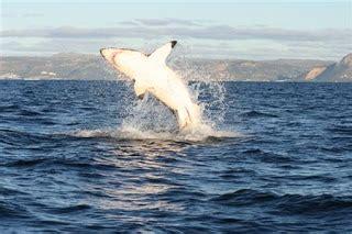 boat crash shark don t be afraid of the shark