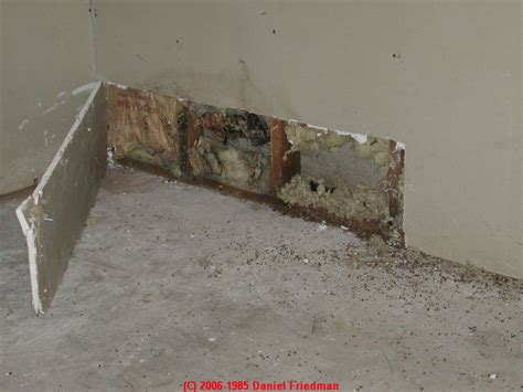 mold on side of house wet basement flooded building salvage cleanout dry out procedure after a building
