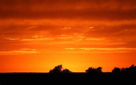 photography landscape nature plants sunset trees