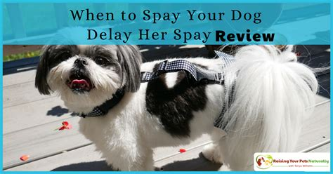 age to spay a when to neuter or spay a delay spay review raising your pets naturally
