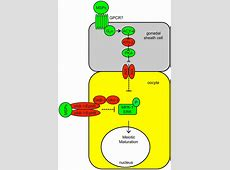 Canonical RTK-Ras-ERK signaling and related alternative ... G Protein Coupled Receptors Pathway