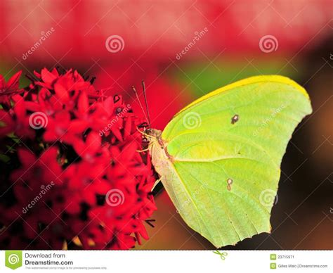 Florida House Plans green yellow butterfly stock image image 23715971