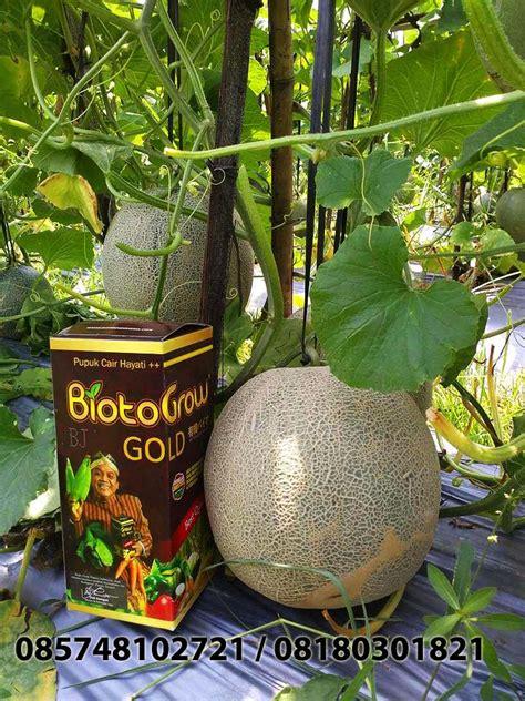 Jual Alat Hidroponik Sidoarjo jual biotogrow pupuk organik pupuk cair terbaik jual