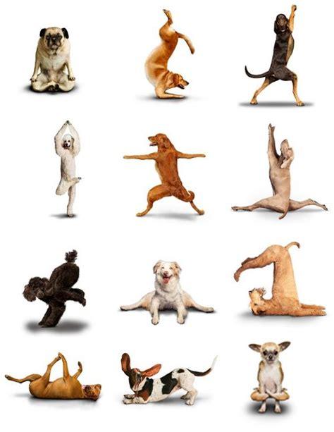 imagenes de yoga para el estres dog yoga para perros con estr 233 s mascotas org animal