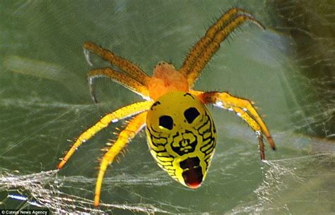 spider with yellow pattern on back face it it s a bug s life stunning photos show colourful