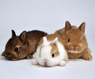 conigli nani alimentazione coniglio nano come nutrirlo con una corretta