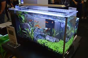 freshwater tanks of the aquatic experience 2016 part 1
