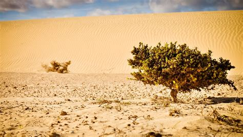 desert plants the ultimate survivors free photo desert plant sand nature free image